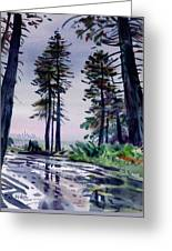 Redwood Reflections   Greeting Card