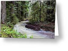 Redwood Stream Greeting Card