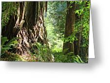 Redwood Tree Art Prints Redwoods Forest Greeting Card