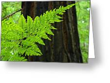 Redwood Tree Forest Ferns Art Prints Giclee Baslee Troutman Greeting Card