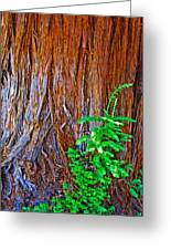 Redwood Tree Trunk At Pilgrim Place In Claremont-california   Greeting Card