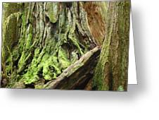 Redwood Trees Art Prints Baslee Troutman Greeting Card