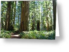 Redwood Trees Forest California Redwoods Baslee Greeting Card