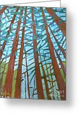Redwood Trees Greeting Card