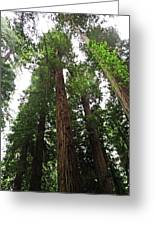 Redwood6 Greeting Card