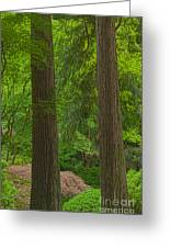 Redwoods #2 Greeting Card