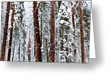 Redwoods In Snow Greeting Card