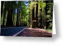 Redwoods Road Greeting Card