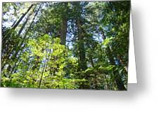 Redwoods Trees Forest Art Prints Baslee Troutman Greeting Card