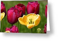 Redyellowtulips6722 Greeting Card