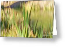 Reed Abstract II Greeting Card