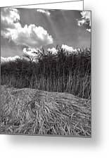Reeds And Clouds Greeting Card