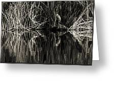 Reeds And Heron Greeting Card