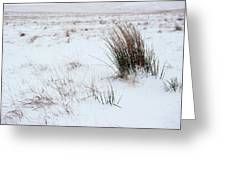 Reeds And Snow Greeting Card