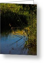 Reeds And The Riverside Greeting Card