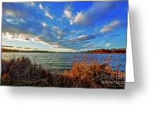 Reeds And Wind Greeting Card