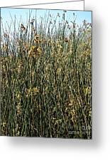 Reeds II Greeting Card