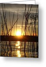 Reeds In A Lake Greeting Card