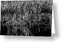 Reeds Reflection  Greeting Card
