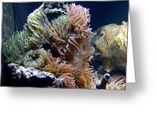 Reef-3 Greeting Card