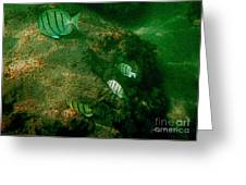 Reef Life Off Hawaii Greeting Card
