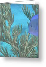 Reef Tang Greeting Card