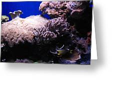 Reef Tank Greeting Card