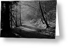 Reelig Forest Walk Greeting Card
