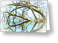 Refection Of Cedar Waxwing Greeting Card