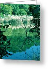 Reflected Branches Greeting Card