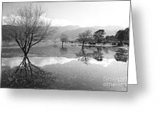 Reflected Trees Greeting Card by Gaspar Avila