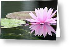 Reflected Water Lily Greeting Card