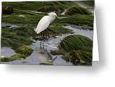 Reflecting At The Tide Pool Greeting Card