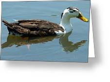 Reflecting Duck Greeting Card