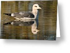 Young Gull Reflections Greeting Card