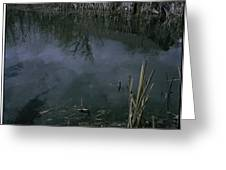 Reflecting Reeds Greeting Card