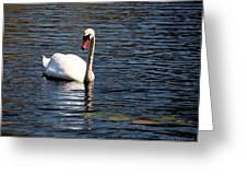 Reflecting Swan Greeting Card by Wayne Marshall Chase