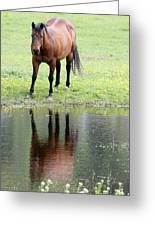 Reflecting Horse Near Water Greeting Card