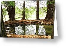 Reflecting Tree Trunks Greeting Card