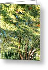 Reflecting Trees On Quiet Pond Greeting Card