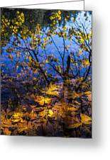 Reflection And Transparency Greeting Card