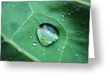 Reflection In A Dew Drop Greeting Card