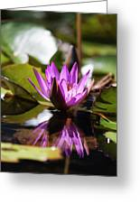 Reflection In Fuchsia Greeting Card