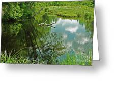 Reflection Of A Tree And Clouds Greeting Card