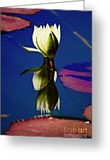 Reflection Of A Water Lily Greeting Card