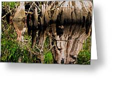 Reflection Of Cypress Knees Greeting Card