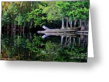Reflection Off The Withlacoochee River Greeting Card