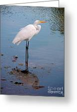Reflection On Stilts Greeting Card
