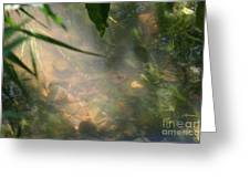 Reflections 3 Greeting Card