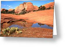 Reflections After The Storm Greeting Card